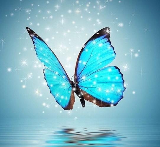 Fond papillon bleu